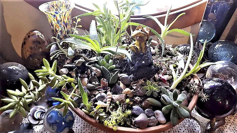 Sandy Parrill: Succulents lure more than gardeners with their beauty