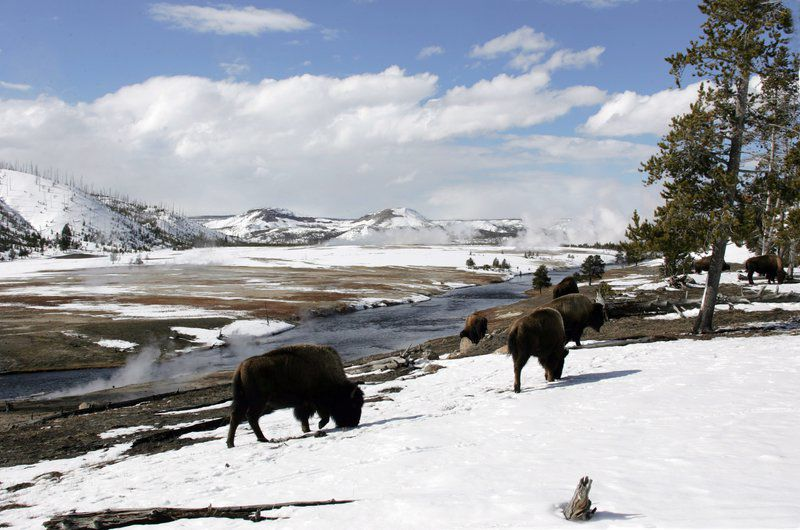 Winter wonderland: Yellowstone's natural beauty featured in documentary