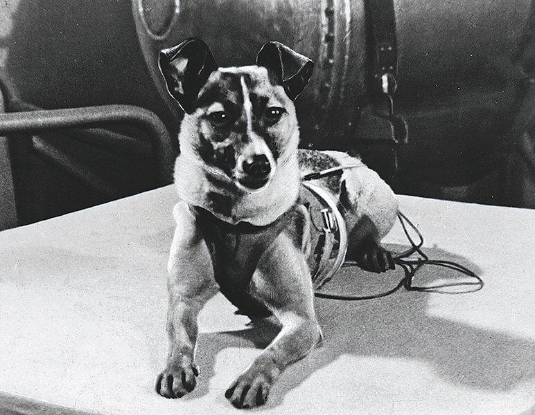 Kevin McClintock: Remembering little Laika
