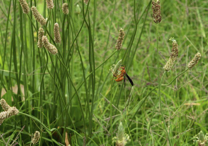 A place on the prairie: Settlement of mining contamination to fund wildlife habitat