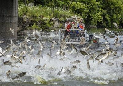 Brandon Butler:National Wildlife Federation sounds alarm on Asian carp
