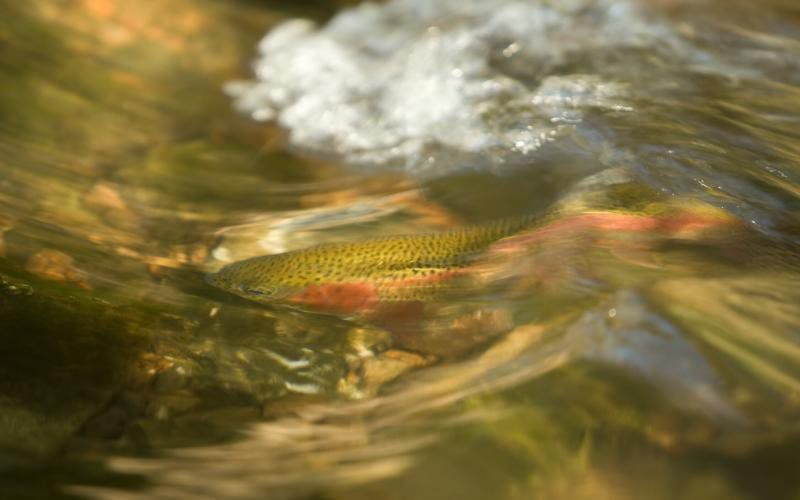 Andy Ostmeyer: Kids Fishing Day and Nature Festival returns to Roaring River