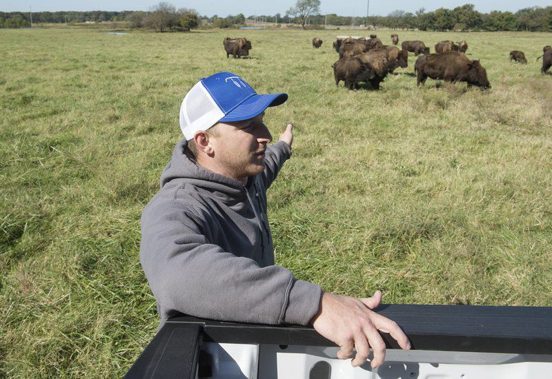 Quapaw Nation welcomes more bison as part of federal program