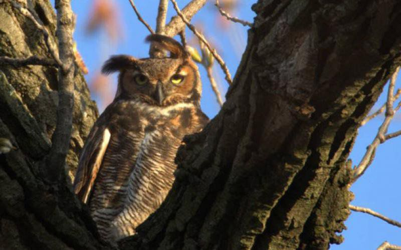 Andy Ostmeyer: February a great time for owl prowls