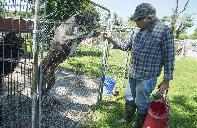 Rural joplin man agrees to close kennel business local news rural joplin man agrees to close kennel business solutioingenieria Choice Image