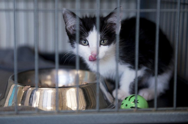 'Kitten season' at animal shelters prompts requests for foster families