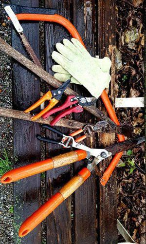 Sandy Parrill: To prune or not to prune, that is the question