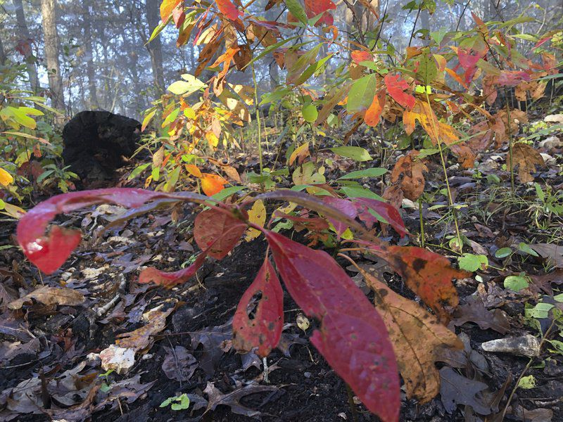 Andy Ostmeyer: Roaring River puts on its coat of many colors