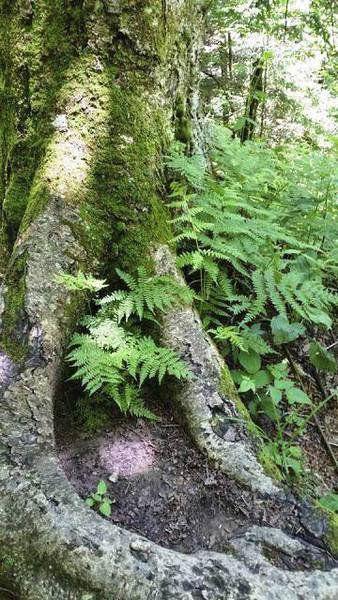 Sandy Parrill: Talking trees