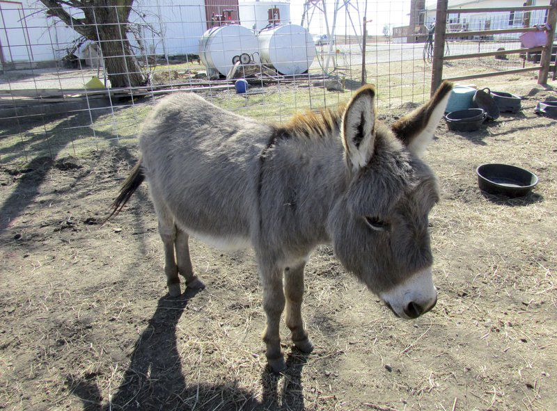Local woman dedicates life to saving neglected donkeys | Lifestyles