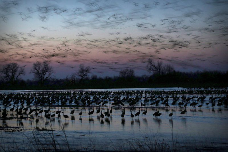 Nebraska's sandhill crane migration gives new meaning to 'flyover country'