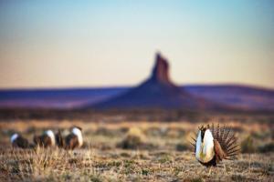 Sage grouse book lands amid debate over future of sagebrush plains