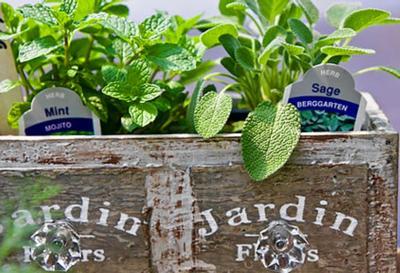 Farmer market herbs