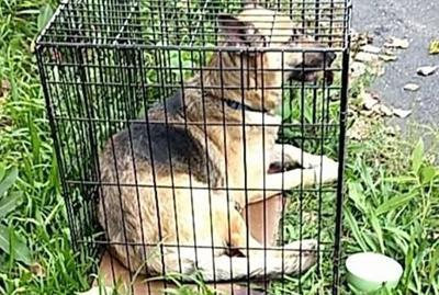 Enfield police seek owner of abandoned dog