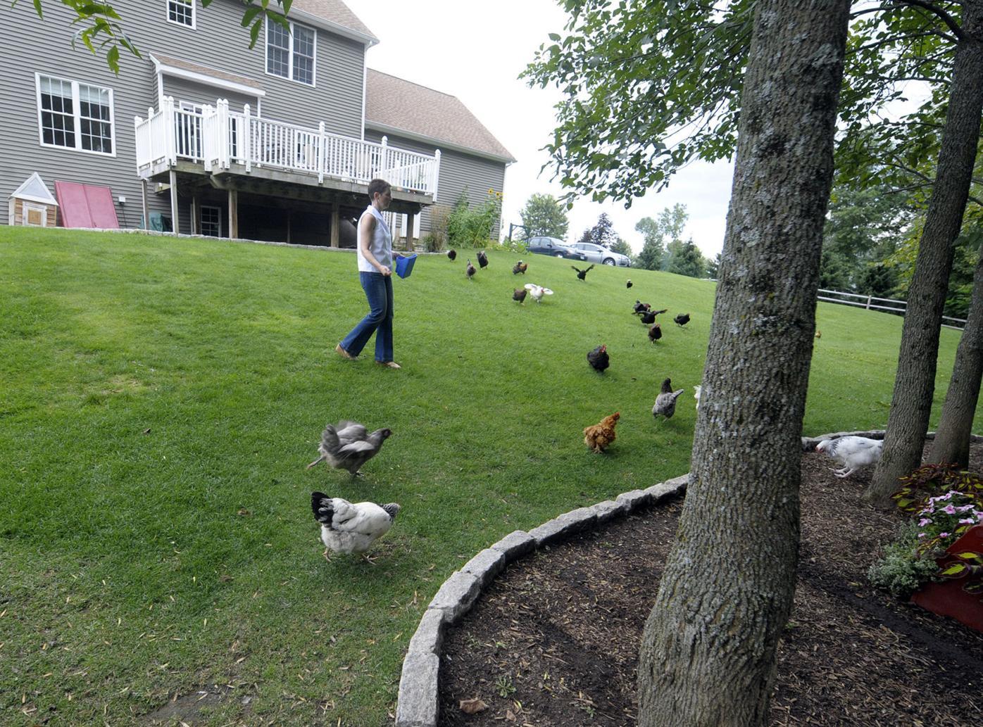 The 'Chicken Chick'