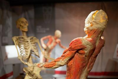 'Real Bodies' exhibit deals with much more than the physical
