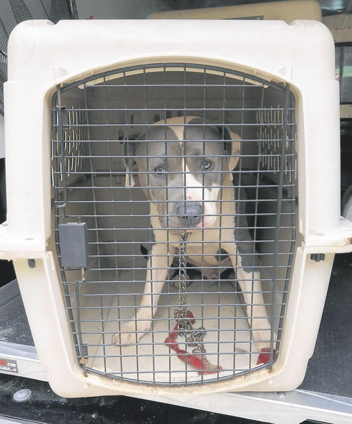 Windsor authorities seek public's help in tracking down owner who abandoned dog