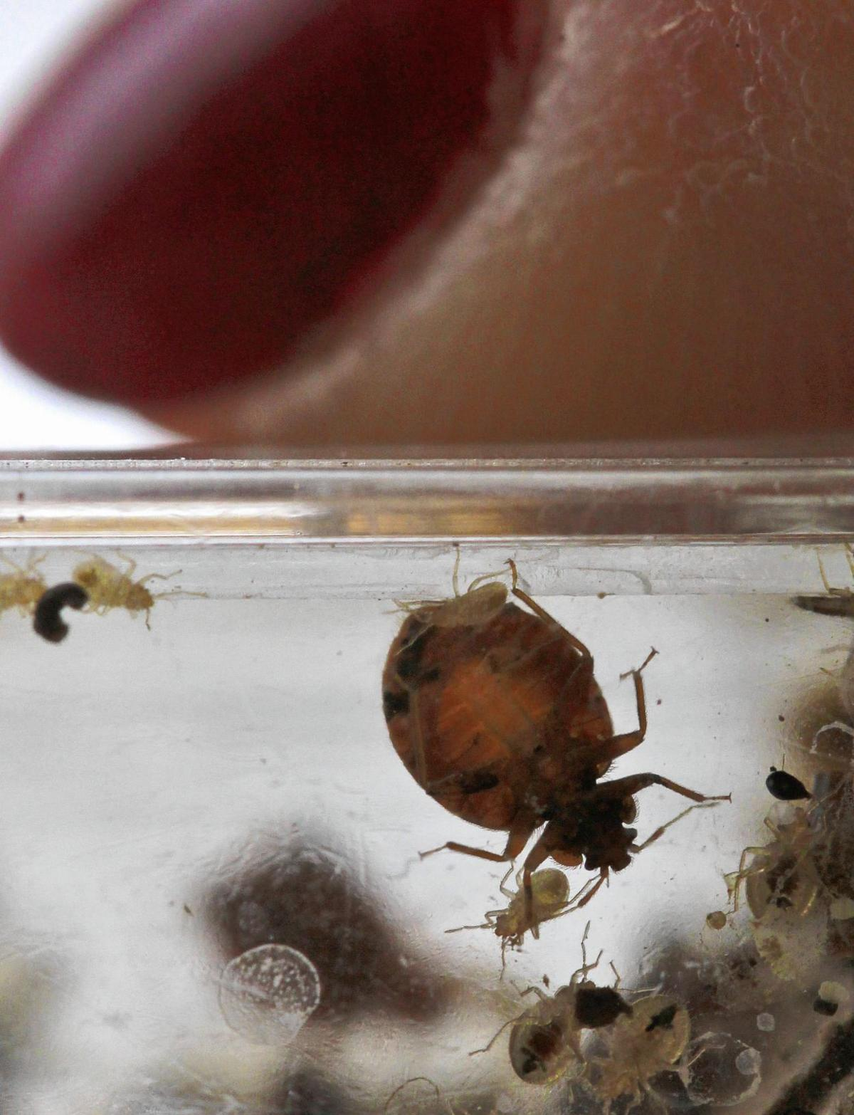 Tiny bugs, big problem