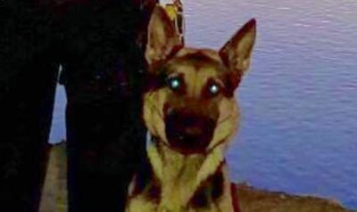 East Windsor police add police dog