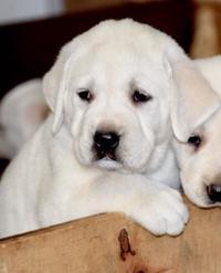 Sale | Pets | journalstar com