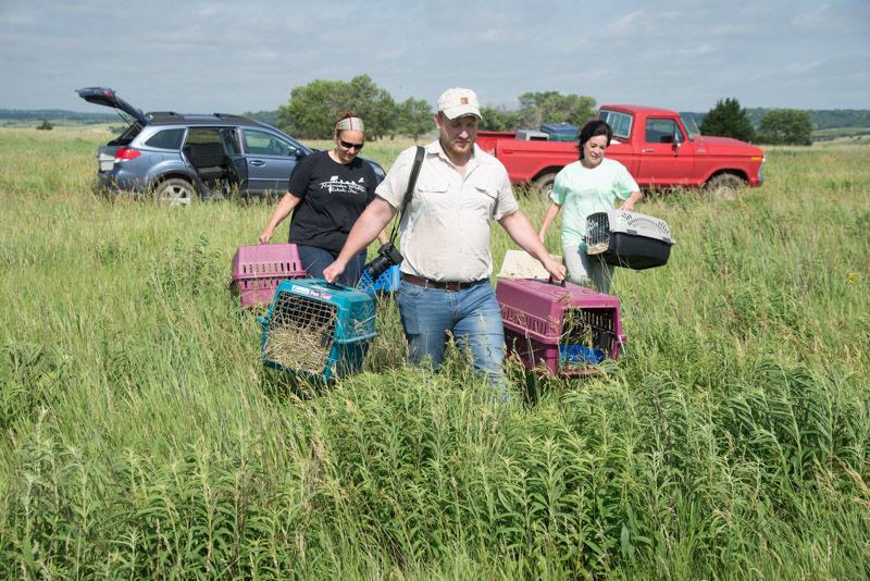 Nebraska Wildlife Federation honors prairie dog conservationist at annual gala   Journal Star