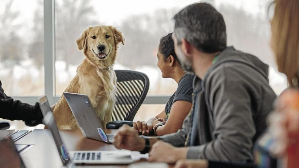 Going back to office? Here are 6 tips for bringing your dog to work