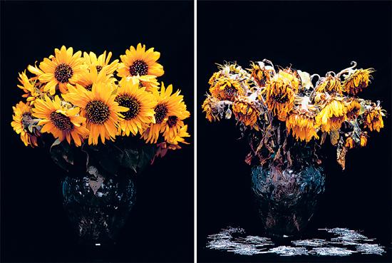 L Kent Wolgamott Flowers Lies And Revolution