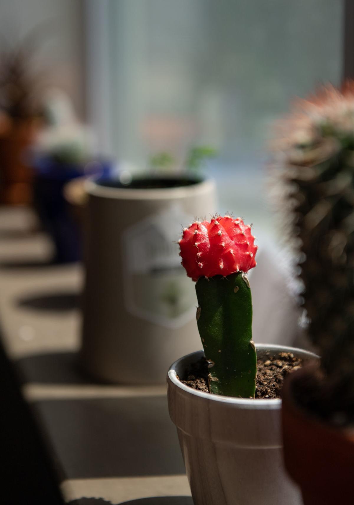 Plant loving roommates, 4.25