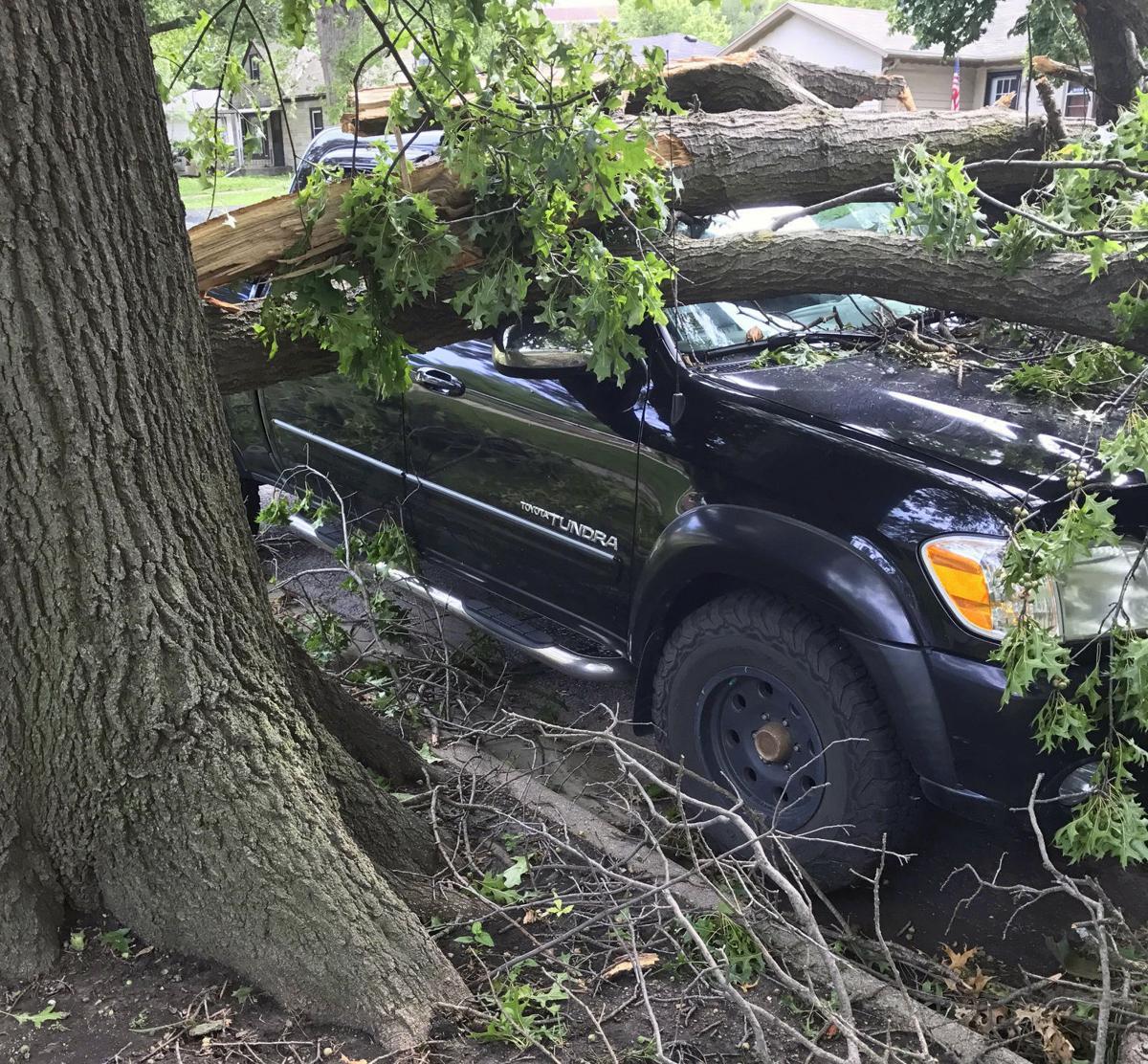 City tree damage