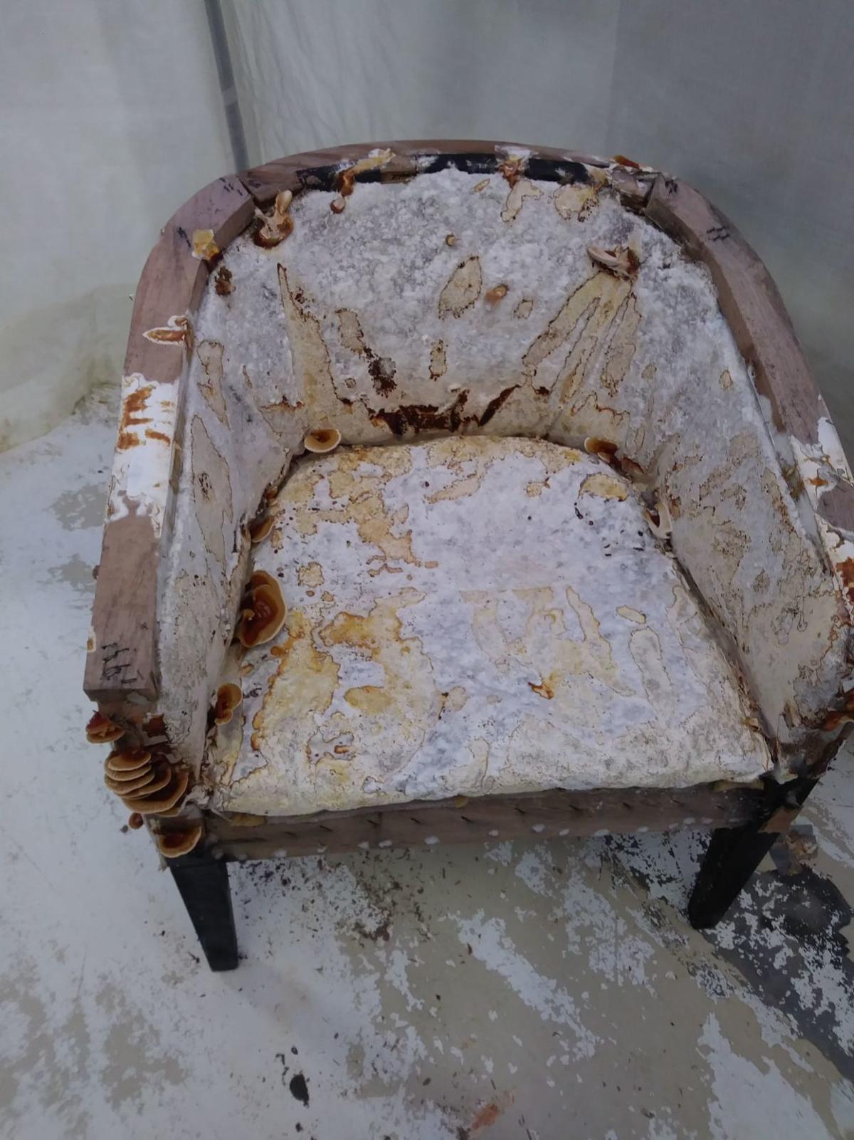 Fungi chair