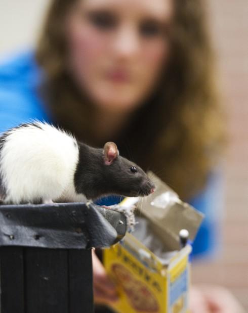 Xtreme Rat Challenge
