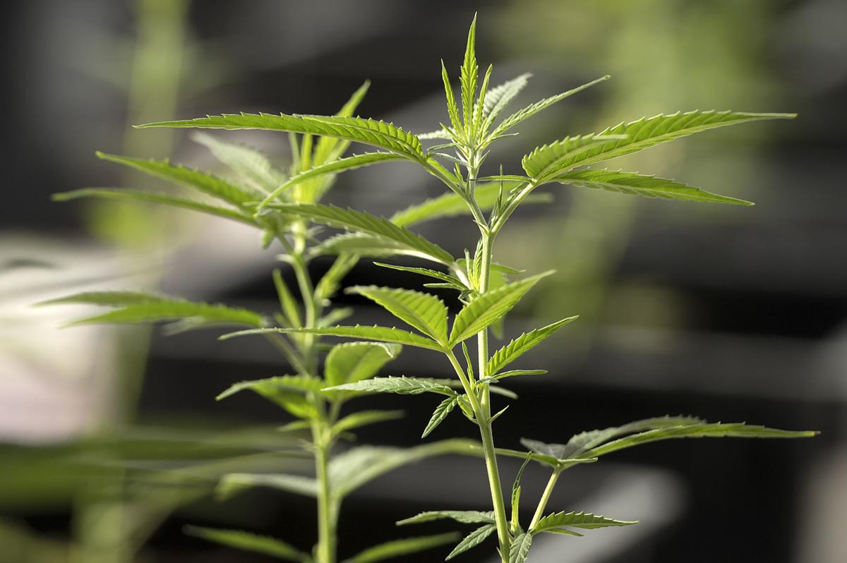 Doane offering online courses to train hemp industry