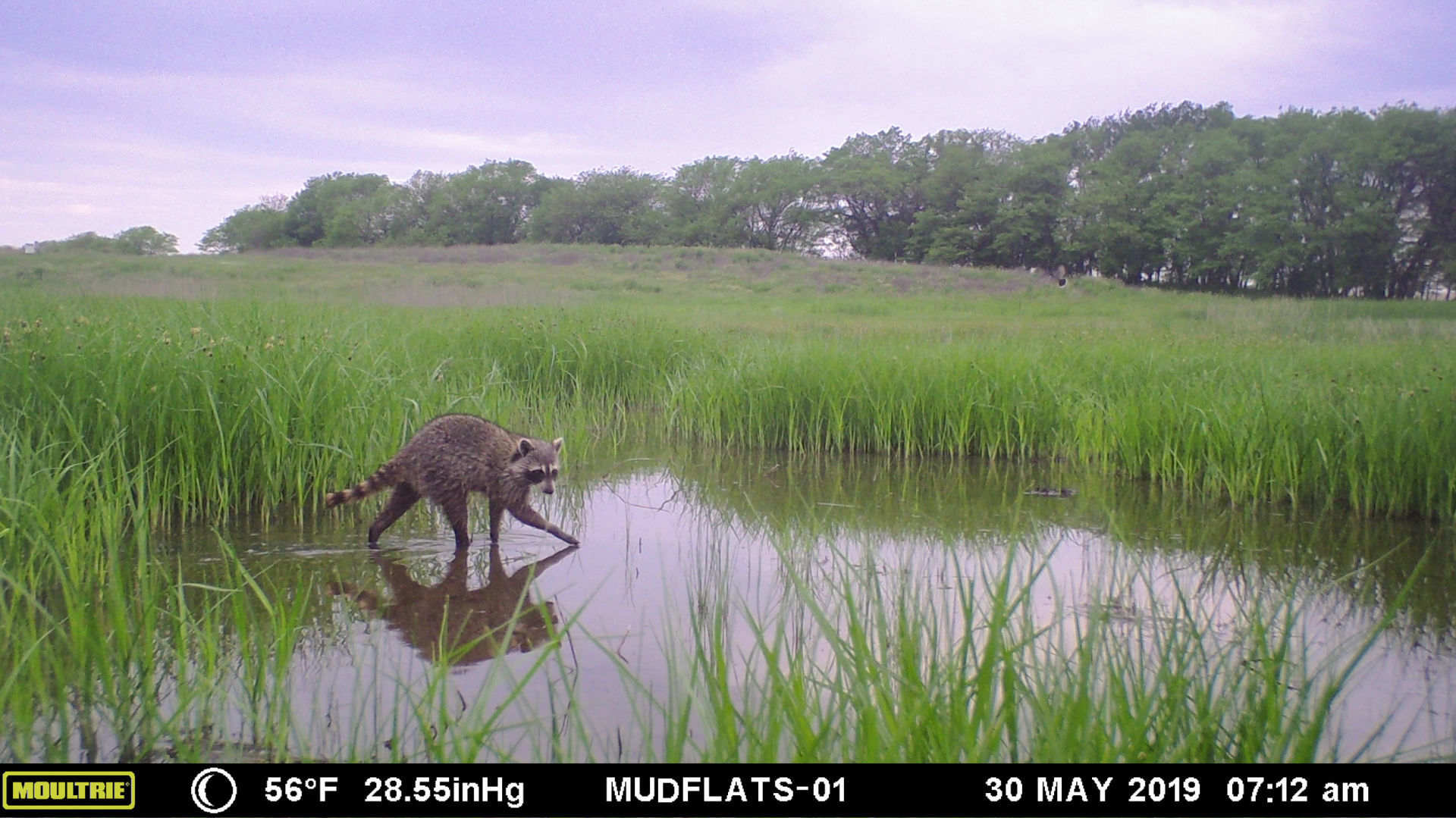 Urban jungle: Student project at saline wetland chronicles