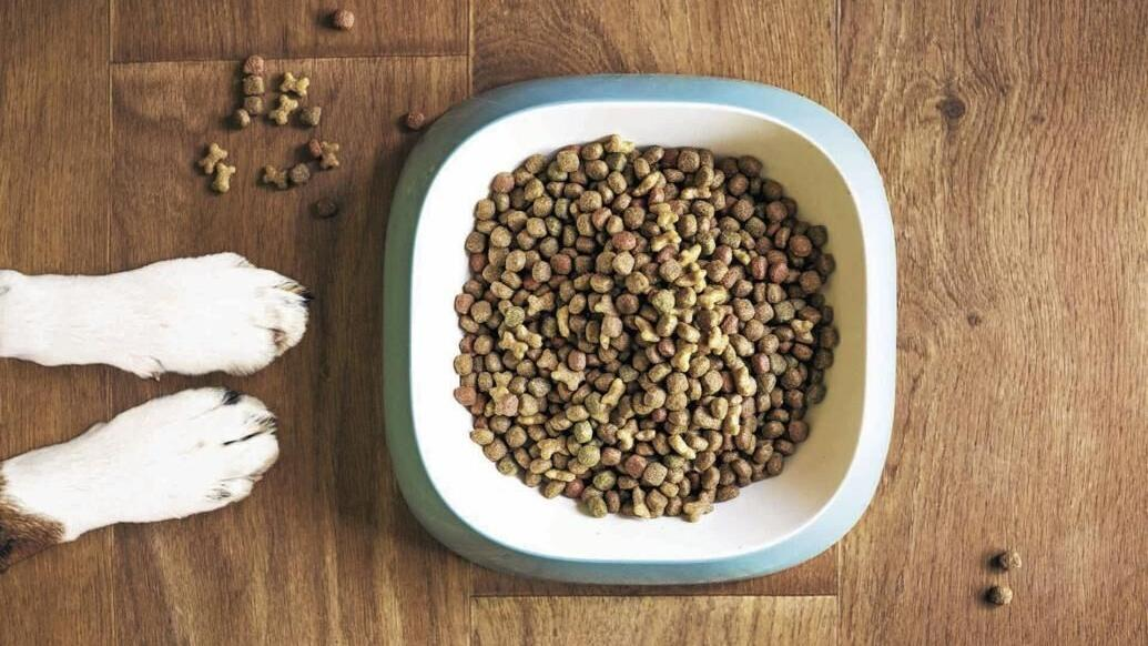 4 steps for a healthy, successful switching of dog food