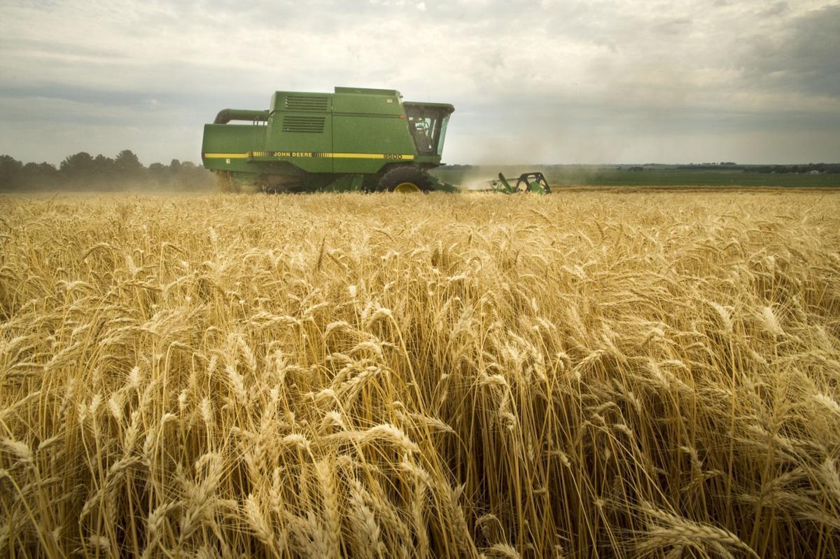 nebraska wheat plantings lowest  record nebraska news 1200 x 798 · jpeg