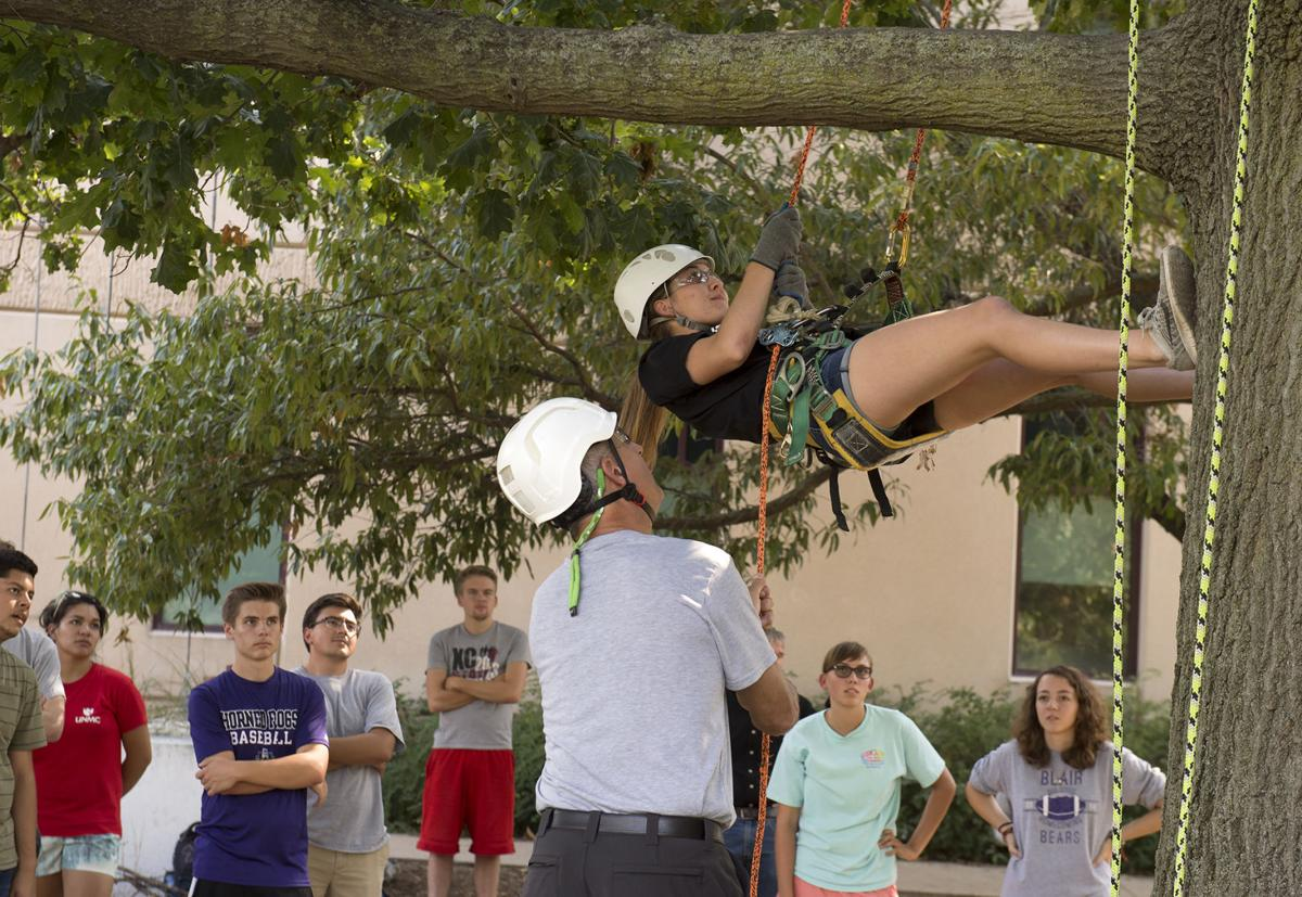 School of Natural Resources tree climbing