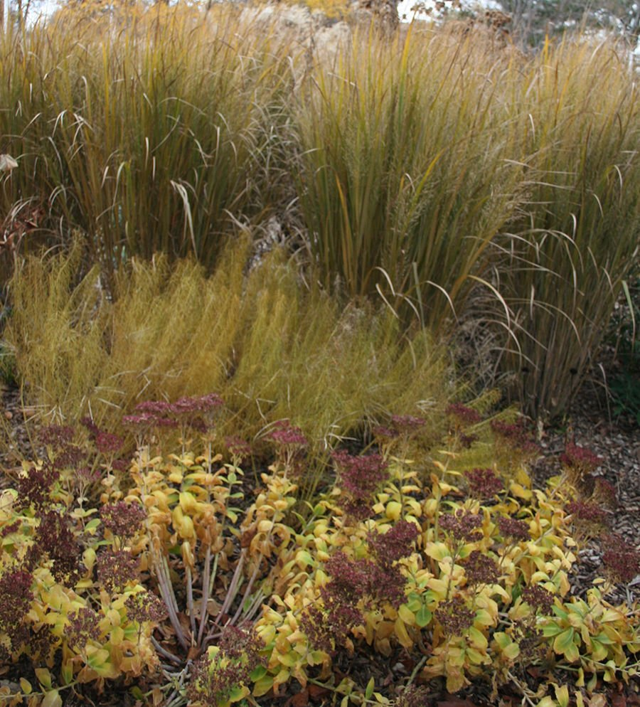 Sustainable Landscape: October is perfect time to plant trees and ...