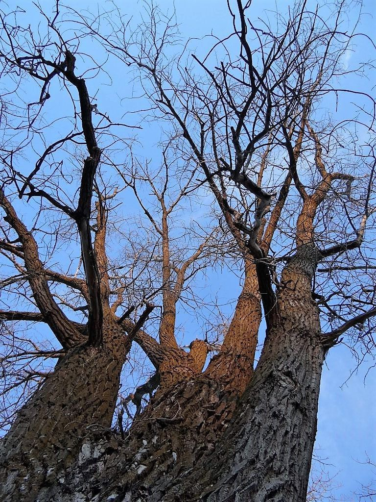 Image Result For Lincoln Tree Service
