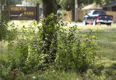 Long Gr In Parks Still Drawing Complaints Local