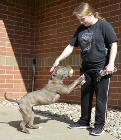 Sioux City council eases pit bull ban   State and Regional