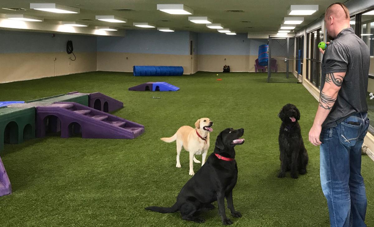 Lincoln Ne Indoor Dog Park