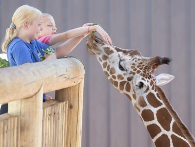 Photos: Lincoln Children's Zoo