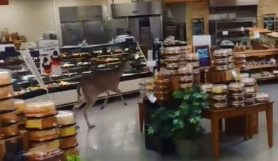 Deer in Hy-vee