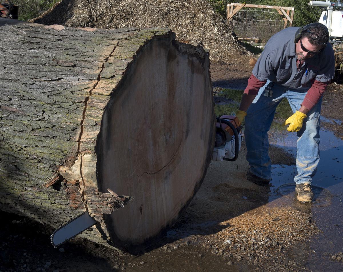 Union College tree milling