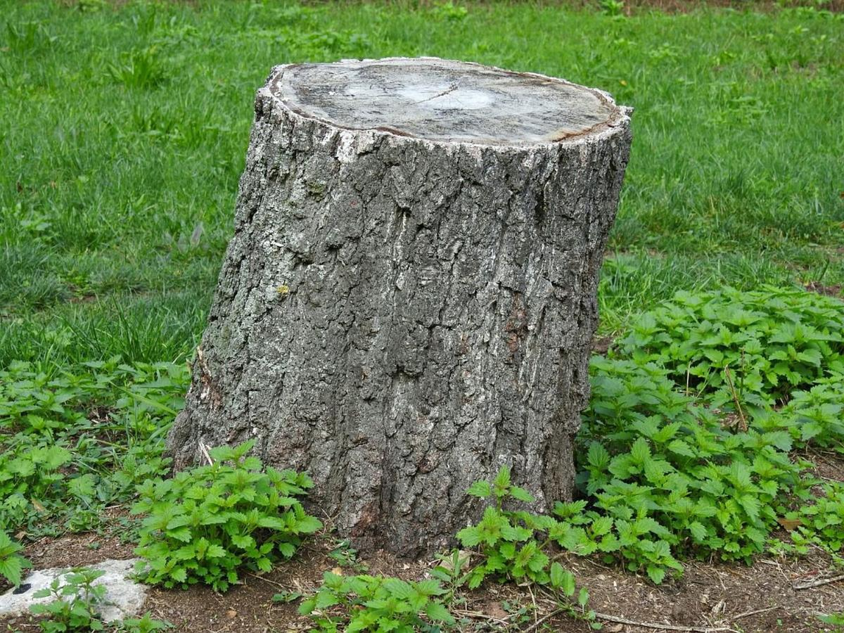 How To Remove An Unsightly Tree Stump From Your Yard