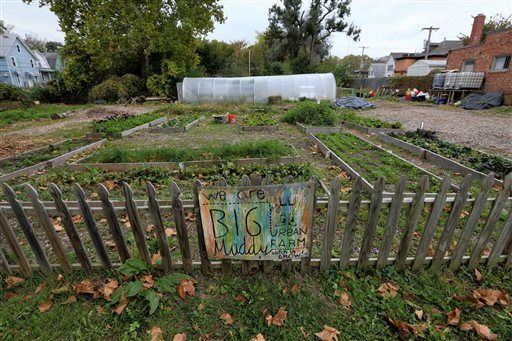 Urban farmers find that success leads to eviction