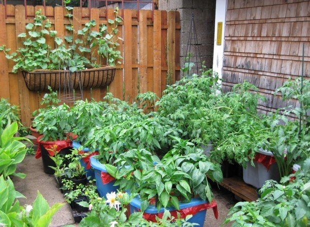 No Backyard No Problem With Container Gardening Home And Garden