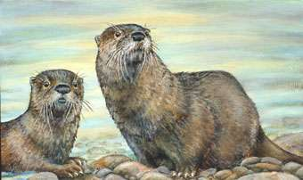 An Artist From Imperial Has Won The Nebraska Habitat Stamp Art Contest A Fifth Time