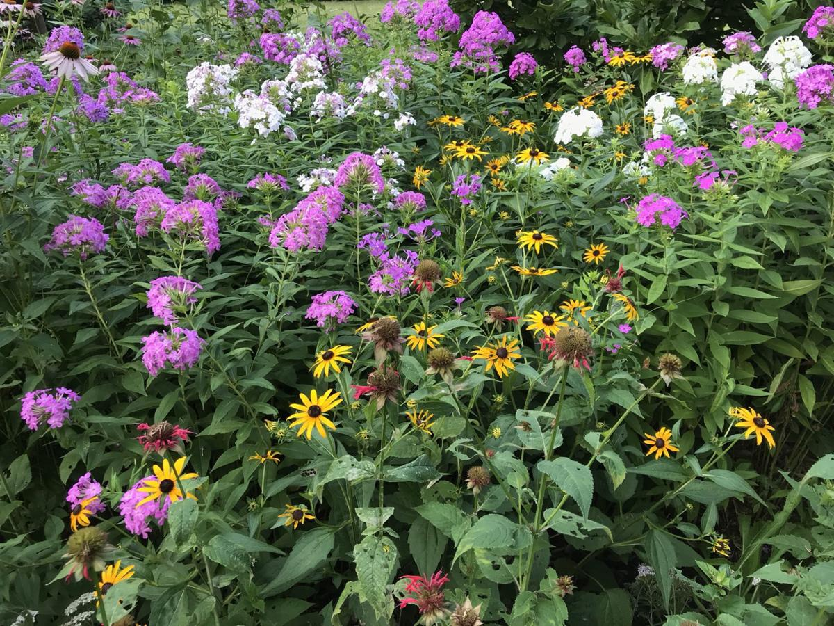 Colorful combination in author's garden