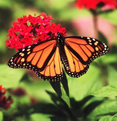 Butterflies Hummingbirds All A Flutter In Nebraska Home